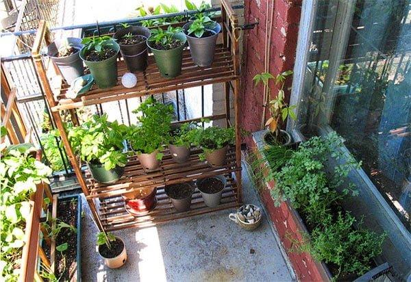 Как можно украсить балкон цветами красиво: фото идеи.